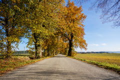 Rural Road in the autumn with yellow trees Stock Image