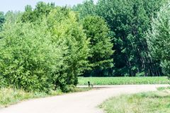 Rural road with bench in the shade of trees. In summer stock photos