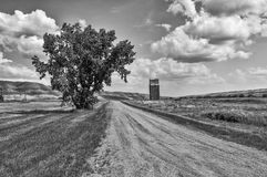 Rural road with a big tree. Black and white photo of grain elevator with a big tree Stock Image
