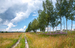 Rural road with birches along field Royalty Free Stock Image