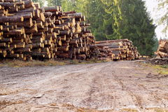 Rural road with bunch of felled trees Royalty Free Stock Image
