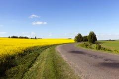 Rural road .  canola Stock Photo