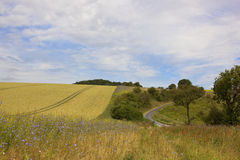 Rural road and chickory flowers Royalty Free Stock Images