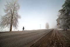 Road in frosty morning. Royalty Free Stock Photos