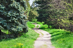Rural road in coniferous forest. Sunny spring day Stock Photo