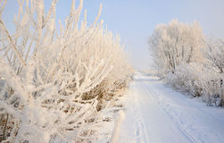 Rural road covered with snow Royalty Free Stock Images