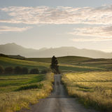 Rural Road Crosses Yellows Fields Royalty Free Stock Image