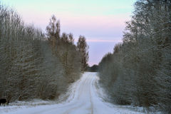 Rural road crossing winter forest Stock Photos