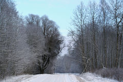 Rural road crossing winter forest Royalty Free Stock Photography