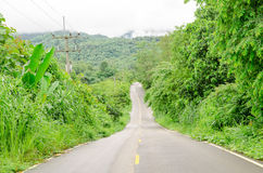 Rural road curve in the bushes and trees Royalty Free Stock Photography