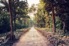 Rural road through the deep green forest. Natural summer background. landscape with perspective. long forest road going into the forest thicket Royalty Free Stock Images