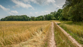 Rural road on the edge of the agricultural field. summer Royalty Free Stock Photography