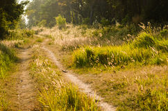 Rural road in the evening Royalty Free Stock Photos