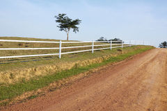 rural road in farm Royalty Free Stock Photo