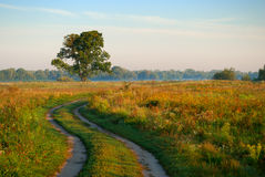 Rural road in a field Stock Photos