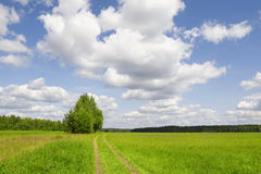Rural road in field green grass Royalty Free Stock Photos