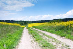 Rural road through a field of rapeseed Stock Images