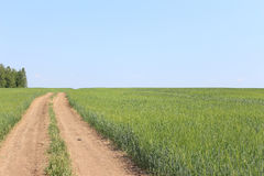 Rural road in field Royalty Free Stock Photo