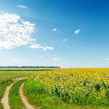 Rural road in field with sunflowers Royalty Free Stock Photo