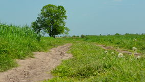 Rural road in the field stock footage