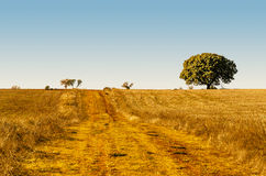 Rural road in the fields Royalty Free Stock Photo