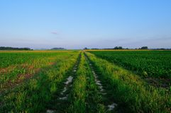 Rural road through the fields Royalty Free Stock Photos