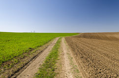 Rural road in fields Stock Photo