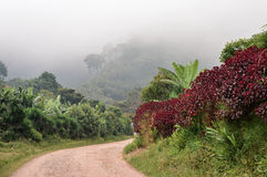 Rural road through the foggy landscapes towards the cloud forests surrounding the small village of coffee growers in Honduras Royalty Free Stock Photo