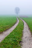 Rural road on foggy morning. Royalty Free Stock Photos