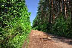 Rural road through the forest Royalty Free Stock Images