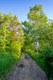 Rural road through forest Stock Images