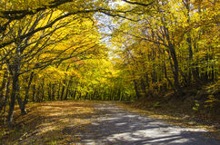 Rural road in forest Royalty Free Stock Photo