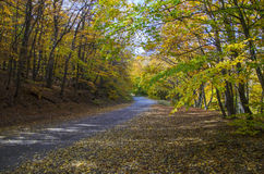Rural road in forest Stock Image