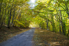 Rural road in forest Stock Photography