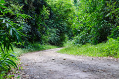 Rural road in forest with bamboo Stock Photos