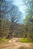 Rural road through forest Royalty Free Stock Image