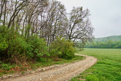 Rural road through forest Royalty Free Stock Photography