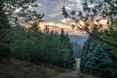 A rural road through the forest at dusk.  Royalty Free Stock Images