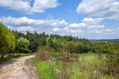 Rural road through the forest. Royalty Free Stock Images