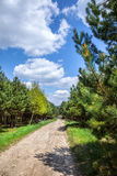 Rural road through the forest. Stock Image