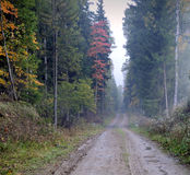 Rural road at forest of Lithuania. Rural road at autumn forest of Lithuania. Fog in early morning Royalty Free Stock Photo