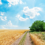Rural road in golden agricultural field under blue sky Stock Photography