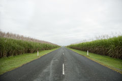 Rural Road in Grasslands Royalty Free Stock Photography