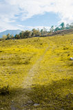 Rural road and green field into the mountains Stock Images