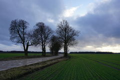 Rural road, green field, white clouds in blue sky Royalty Free Stock Image