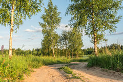 Rural road through green fields with trees and cloudy sky. Belarus royalty free stock image