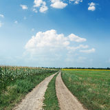 Rural road in green fields under blue sky Stock Images