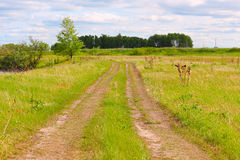 Rural road. Rural road through a green meadow Stock Images