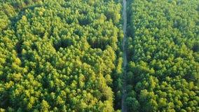 Rural road in green woods stock video