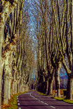 Rural road with high trees on both sides. This is a series of photos with a road in Provence, France guarded by high trees on both sides Royalty Free Stock Image